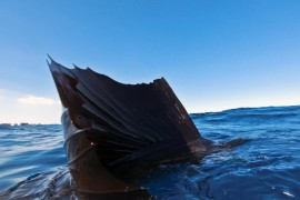general-sailfish2
